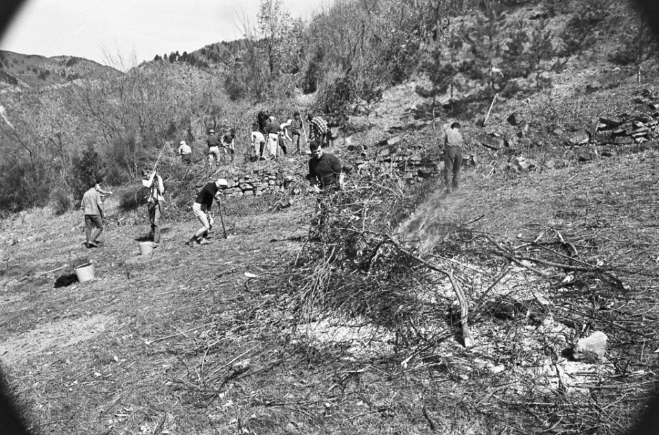 Le operazioni di rimboschimento del Bosco degli Svizzeri del Mugello