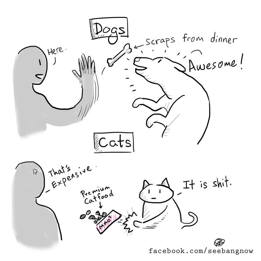 Croccantini e mangime per il gatto