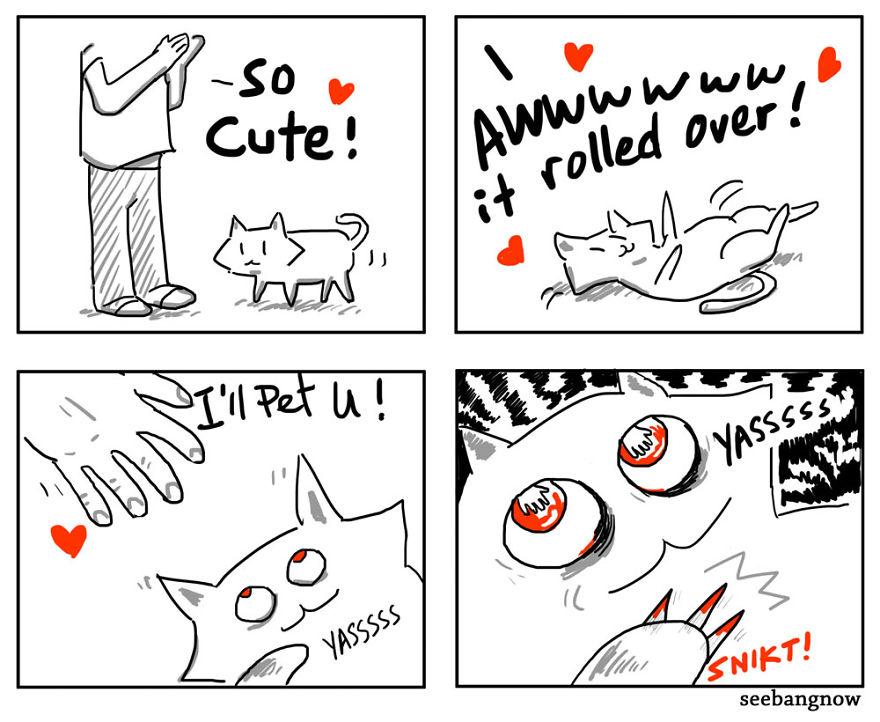 Il gatto si mostra carino per poi graffiare